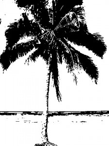 palm tree bw 225x300 Clipping Mask Tutorial