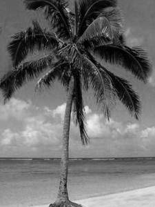 palm tree grayscale 225x300 Clipping Mask Tutorial
